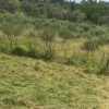 KOMUNA PETRELE, TIRANE; FSHATI CELIK; 200 M LARG QENDRES TREGTARE TEG.