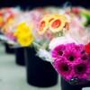 FLORAL FANTASY - dyqan lulesh ne Bllok Kërkon të punësojë Shites/e