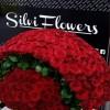 punonjese-silvi-flowers_tirane-kerkon-te-punesoje