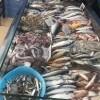 PASTRUESE PESHKU Peshk Zylyftari Kërkon të punësojë