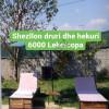 SHEZLLON