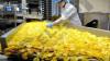 punonjese-punishte-per-perpunim-patate-kerkon-te-punesoje